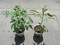 peat vs. biochar
