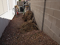 Decomposing Biomass :: Henderson Nevada Yard Bio-Waste_1