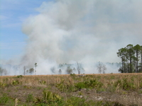 Burning Biomass :: Pine Plantations