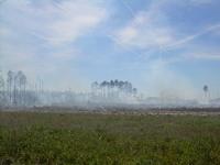 Burning Biomass :: Pine Plantations