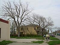 Dead Trees in Galveston, TX