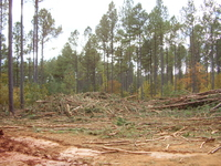 Forest Residues